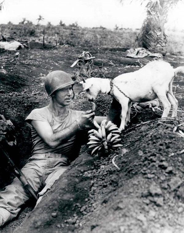 16-Soldado-comparte-una-banana-con-una-cabra-durante-la-batalla-de-Saipan-WWII-1944