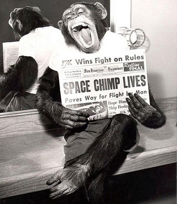36-Mono-astronauta-posando-para-la-camara-tras-mision-al-espacio-1961