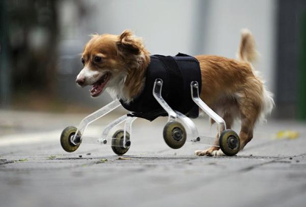 animales-discapacitados-01