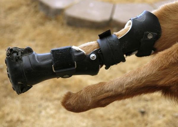 animales-discapacitados-04