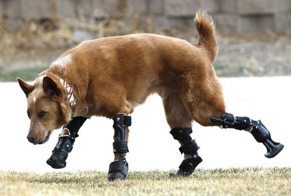 animales-discapacitados-05