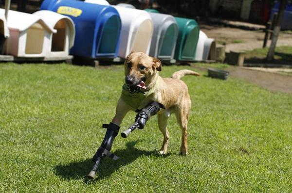 animales-discapacitados-09
