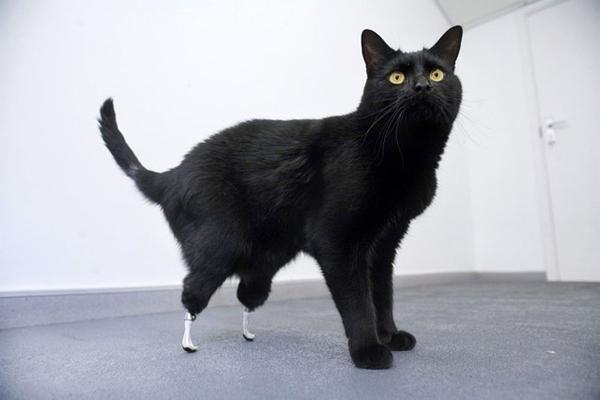 animales-discapacitados-10