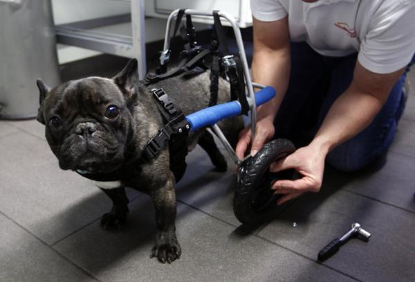 animales-discapacitados-14