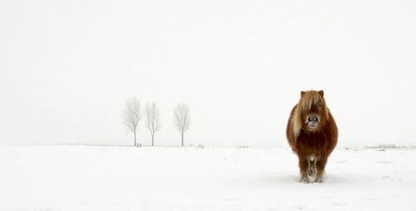 concurso-mundial-fotografia-sony-01