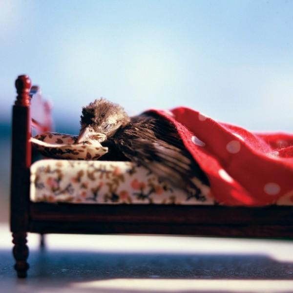 fotos-mascotas-muertas-03