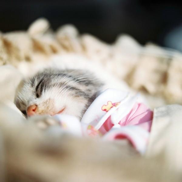 fotos-mascotas-muertas-06