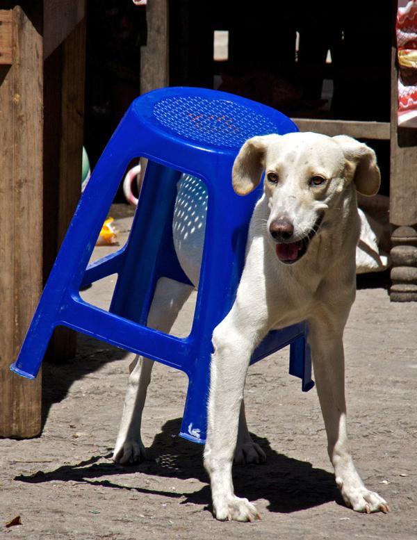 mascotas-posturas-03