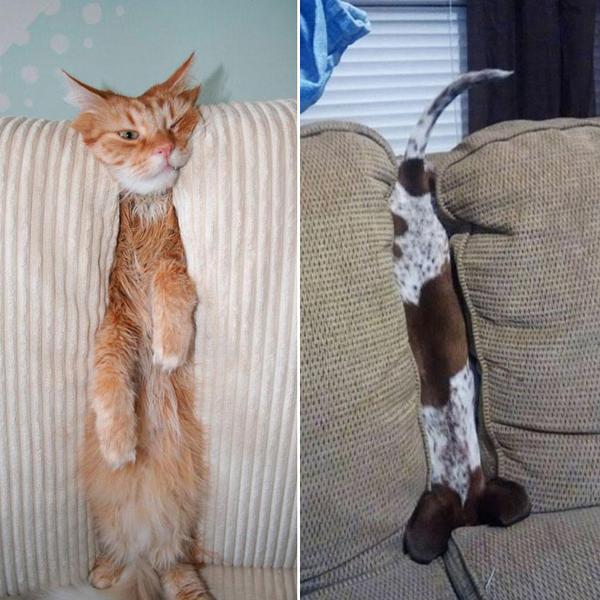 mascotas-posturas-16