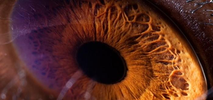 ojos-de-animales-00