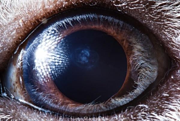 ojos-de-animales-01