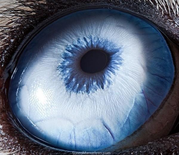 ojos-de-animales-02