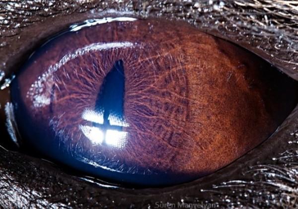 ojos-de-animales-03