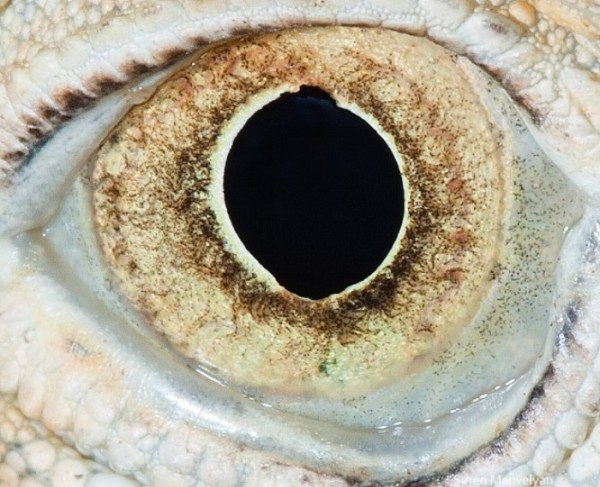 ojos-de-animales-05