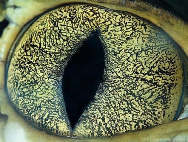 ojos-de-animales-09