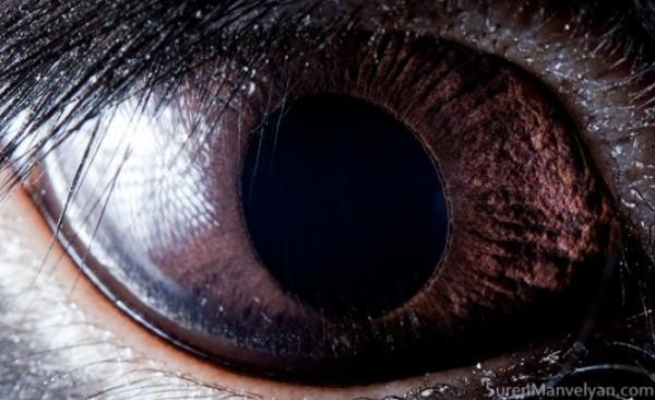 ojos-de-animales-14