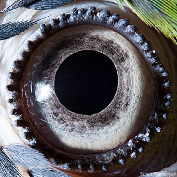 ojos-de-animales-15