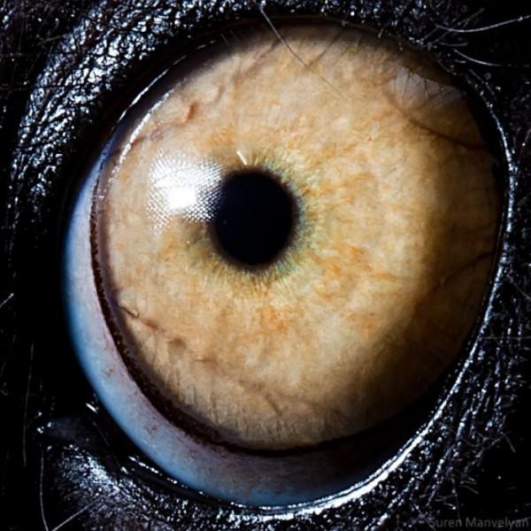 ojos-de-animales-16