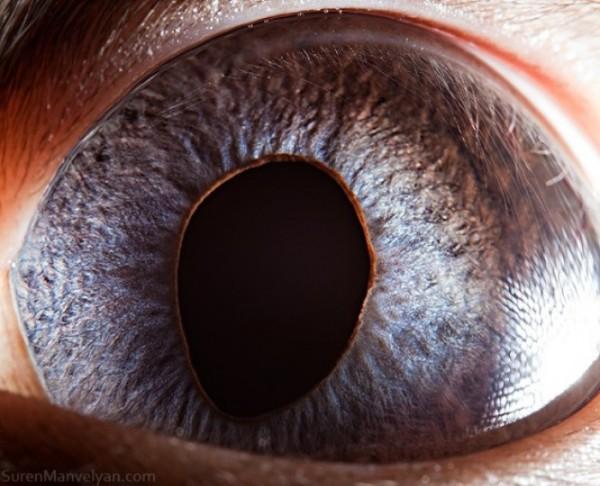 ojos-de-animales-17