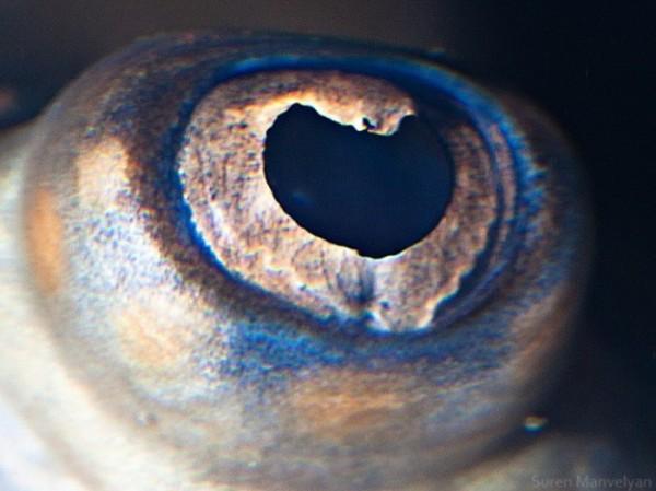 ojos-de-animales-19