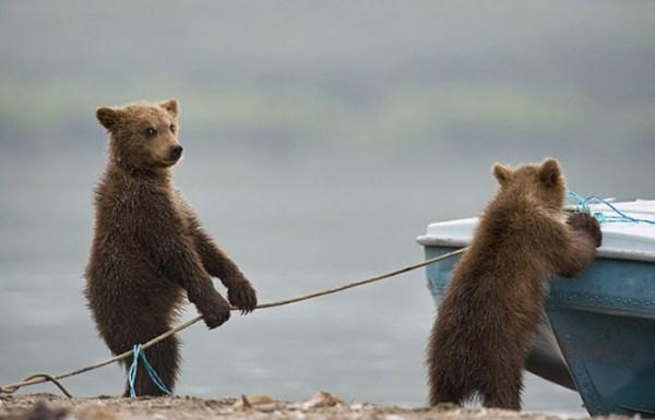 osos-graciosos-haciendo-cosas-de-humanos-01