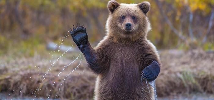 osos-graciosos-haciendo-cosas-de-humanos-02