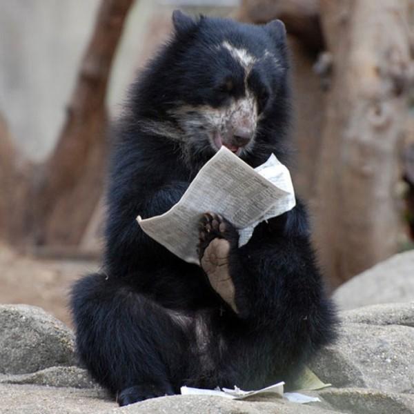 osos-graciosos-haciendo-cosas-de-humanos-03