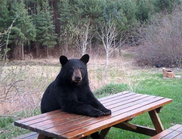 osos-graciosos-haciendo-cosas-de-humanos-05