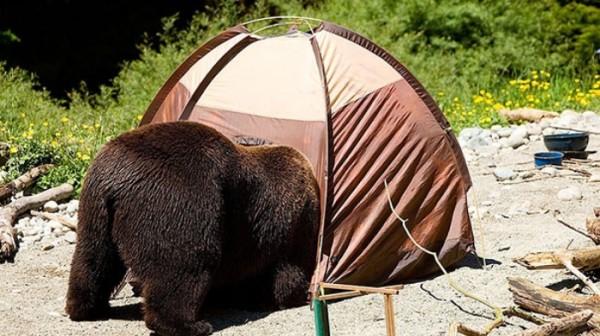 osos-graciosos-haciendo-cosas-de-humanos-07