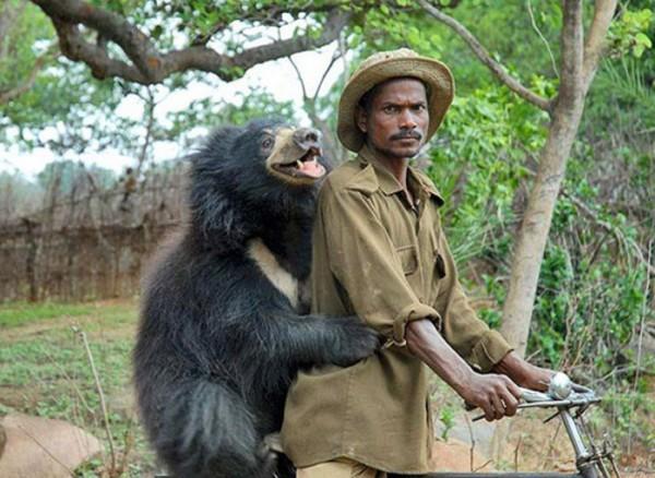 osos-graciosos-haciendo-cosas-de-humanos-08