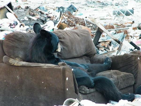 osos-graciosos-haciendo-cosas-de-humanos-09