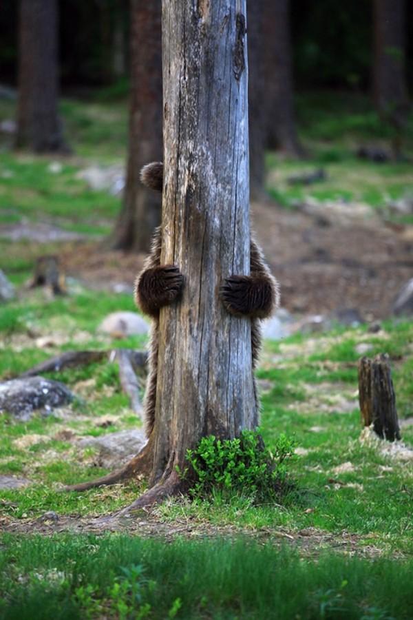 osos-graciosos-haciendo-cosas-de-humanos-10