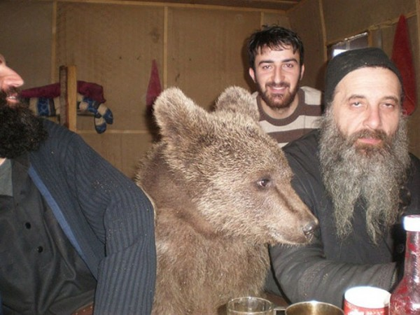 osos-graciosos-haciendo-cosas-de-humanos-13