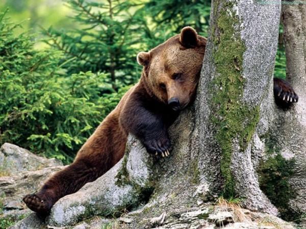 osos-graciosos-haciendo-cosas-de-humanos-14
