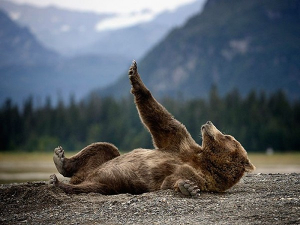 osos-graciosos-haciendo-cosas-de-humanos-16