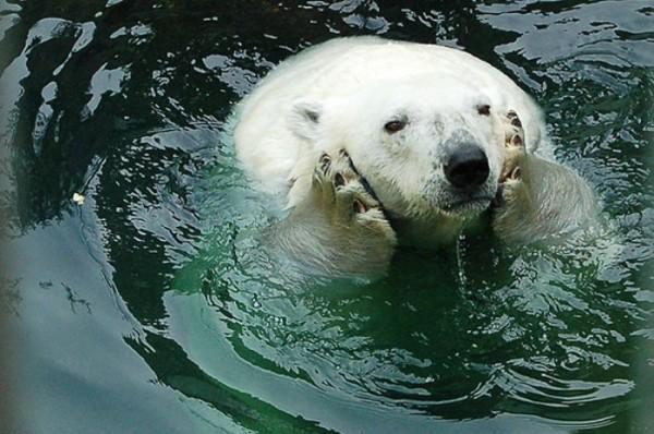 osos-graciosos-haciendo-cosas-de-humanos-17