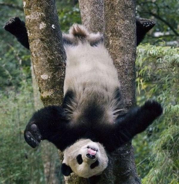 osos-graciosos-haciendo-cosas-de-humanos-19