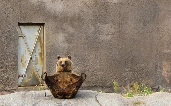 osos-graciosos-haciendo-cosas-de-humanos-20