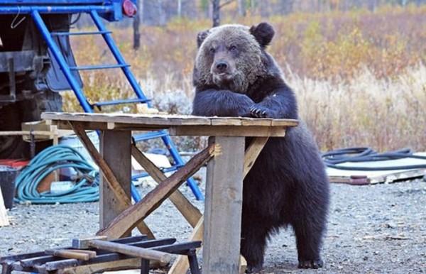 osos-graciosos-haciendo-cosas-de-humanos-21