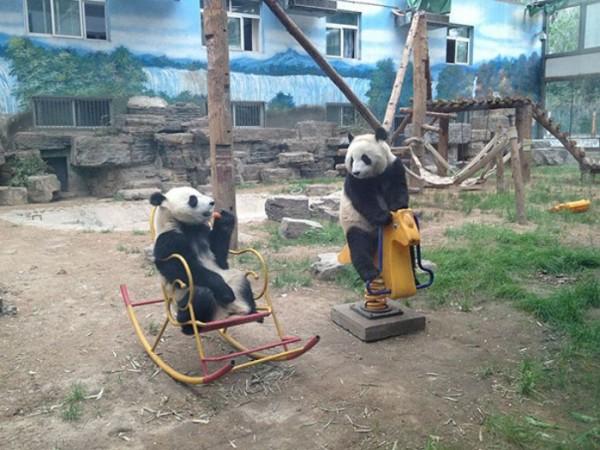 osos-graciosos-haciendo-cosas-de-humanos-22