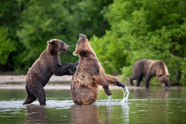 osos-graciosos-haciendo-cosas-de-humanos-24