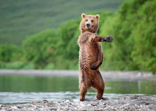osos-graciosos-haciendo-cosas-de-humanos-25