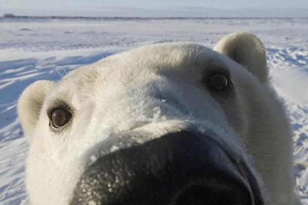 osos-graciosos-haciendo-cosas-de-humanos-26