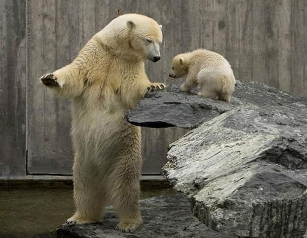 osos-graciosos-haciendo-cosas-de-humanos-27