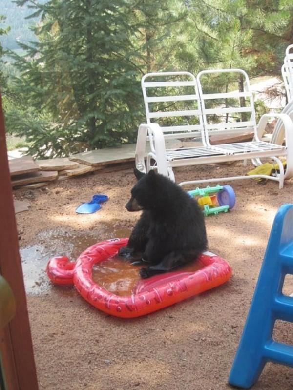 osos-graciosos-haciendo-cosas-de-humanos-28