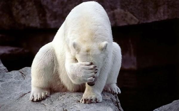 osos-graciosos-haciendo-cosas-de-humanos-29