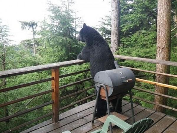osos-graciosos-haciendo-cosas-de-humanos-32