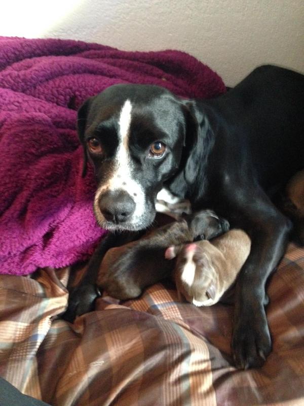 rescate-perra-embarazada-08