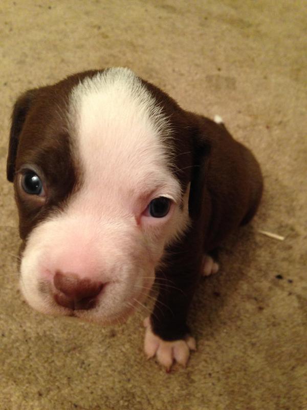 rescate-perra-embarazada-19