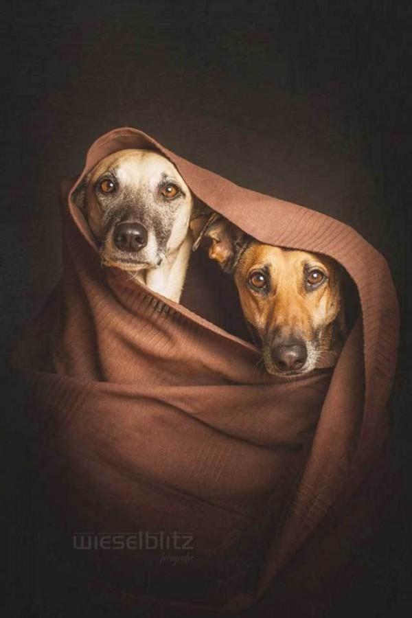retratos-de-perros-05